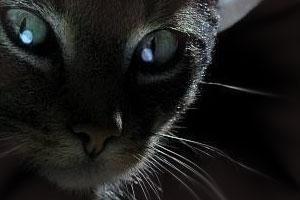 Сонник кот, кошка, котята