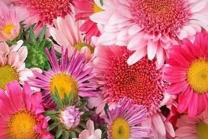 Сонник цветы, букет