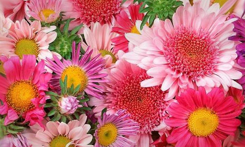Сонник цветы
